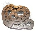 CHAIN, TRANSFER CASE (242)